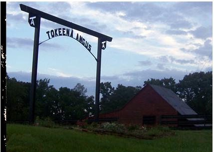 Today's Tokeena